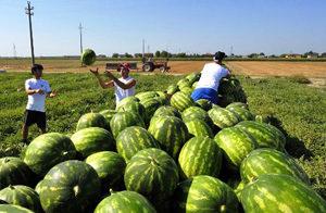 Lettera aperta al Prefetto su lavoro stagionale agricoltura e accoglienza migranti