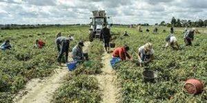 Incontro Tavolo Prefettizio su lavoro stagionale in agricoltura e Caporalato