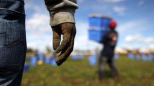 Rete del lavoro agricolo di qualità: serve incentivare all'adesione le realtà produttive locali