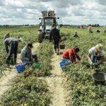 Nessun sostegno ai braccianti, sit-in dei lavoratori agricoli a Lecce